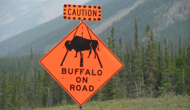 This is a buffalo