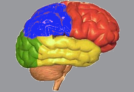 brain-Google