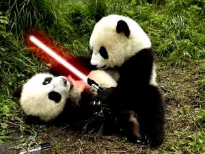 panda-battle