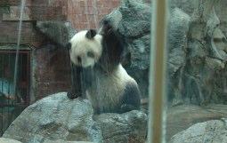 panda-shower