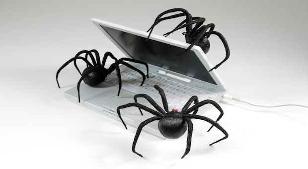 spiders-crawling-istock