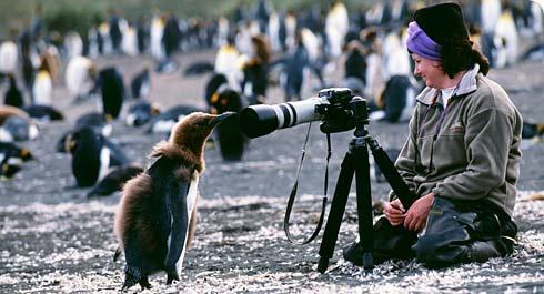 media-penguin