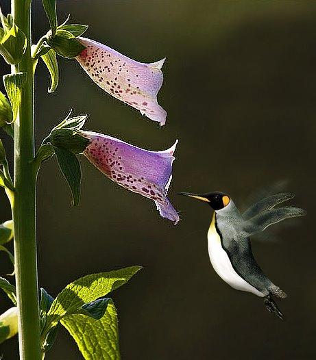 humminguin