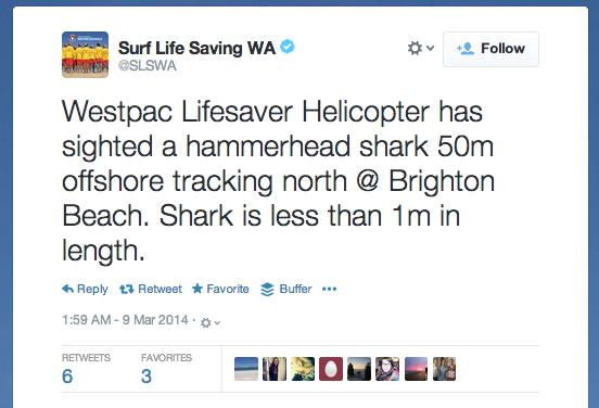shark-sighting