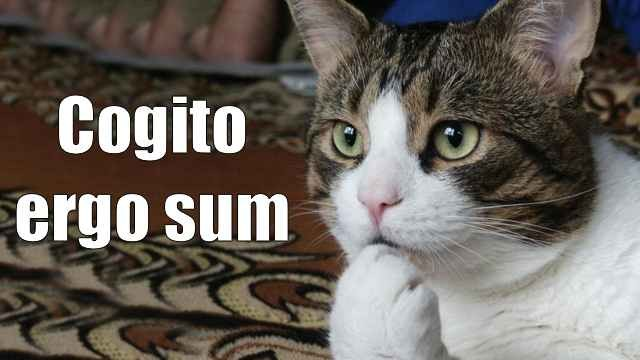Cogito Ergo Sum Cat