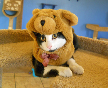 cat-fashion-bear