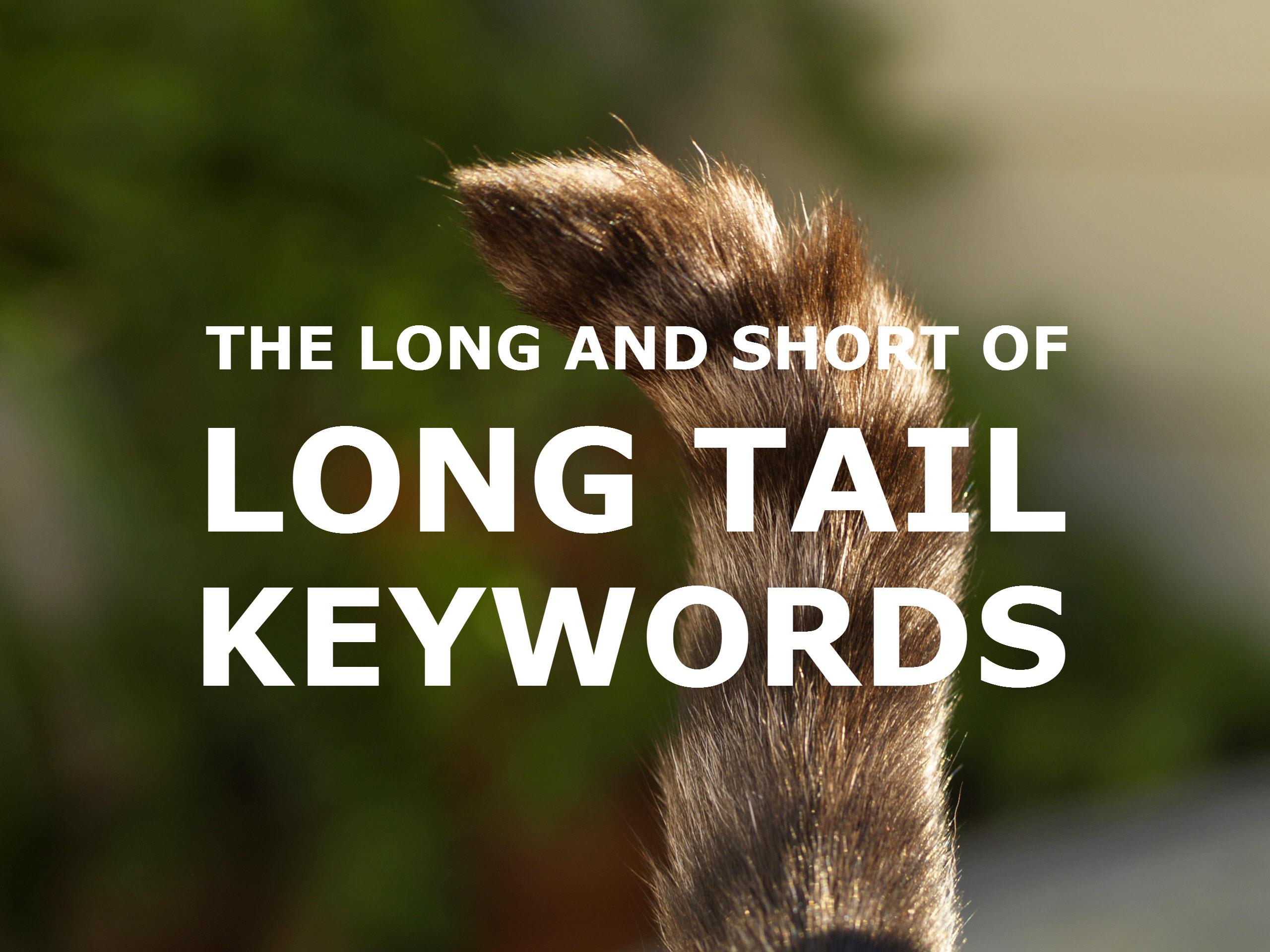 long-tail-feature-image