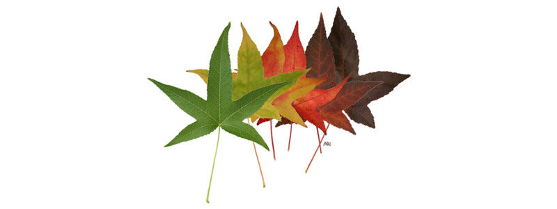 overlapping leaves