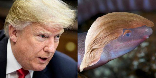 trump worm