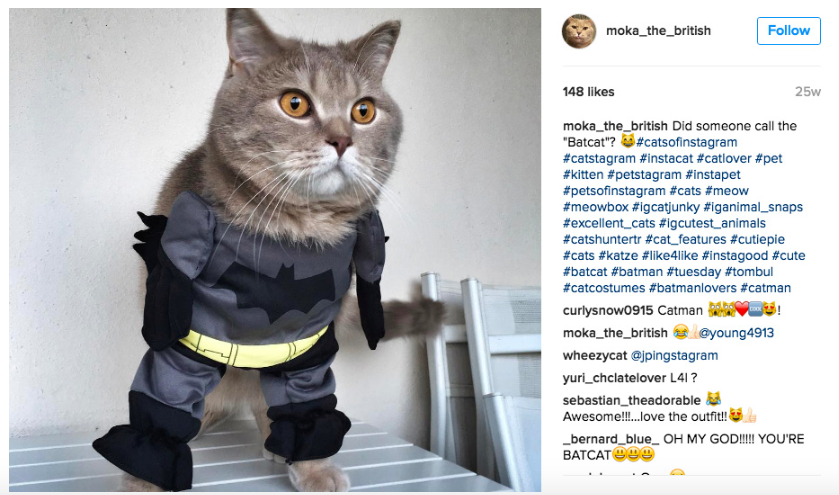 Moka the british instagram