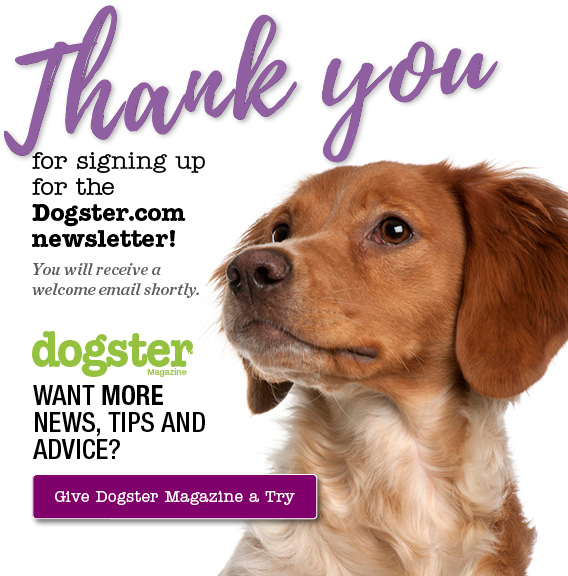 dogster thank you notification example