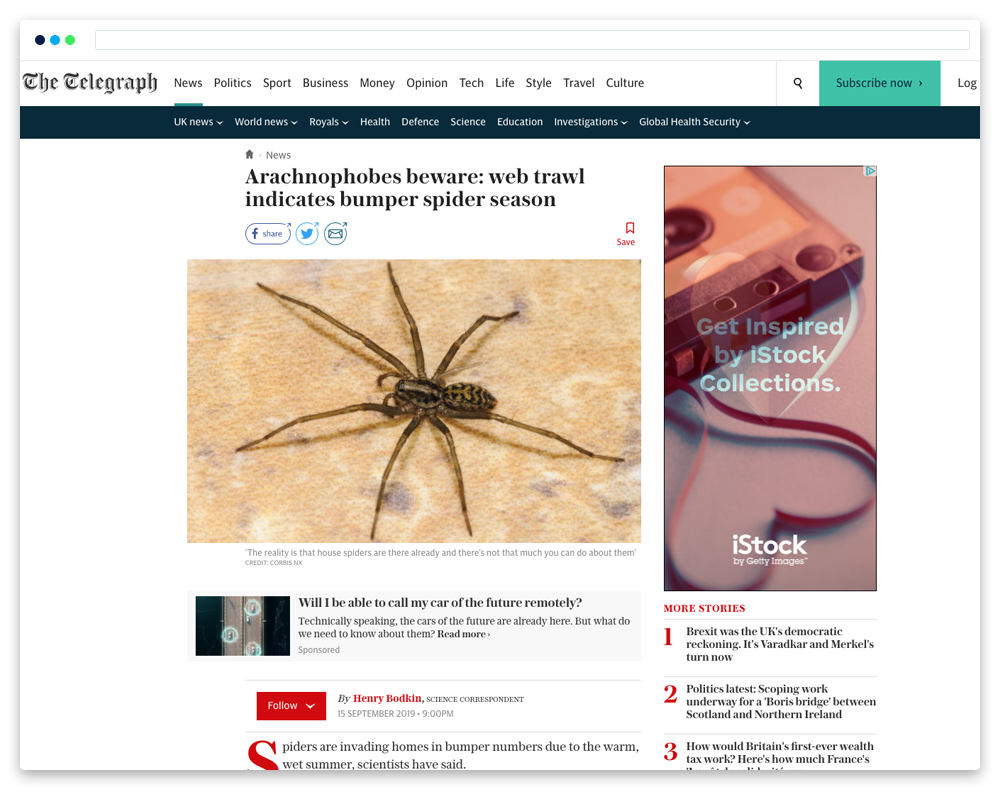 spiders in news